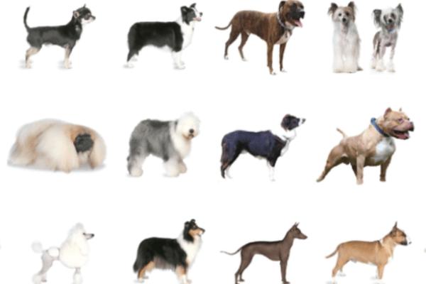 cuantas razas de perro hay en el mundo