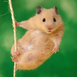 Alimentación del ratón