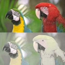 gama colores vision perros