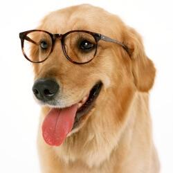 la visión de los canes