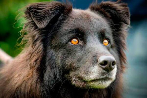 cómo ven los perros color blanco y negro