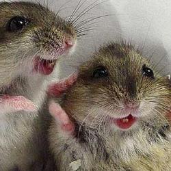 Qué comen los ratones salvajes