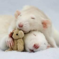 Ratones herbívoros