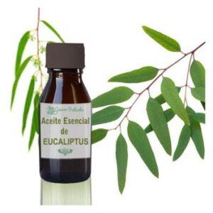 eliminar pulgas en perros aceite eucalipto