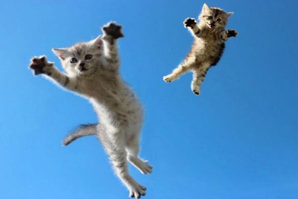 cuantas vidas tienen los gatitos
