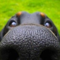 cómo es la vista de los canes