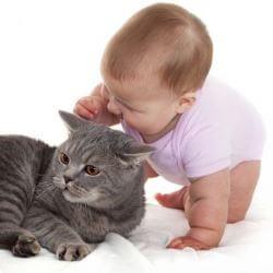 Equivalencia entre años de gato y humanos