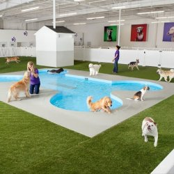 Hoteles para perros o caninos