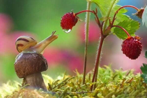 Qué comen los caracoles
