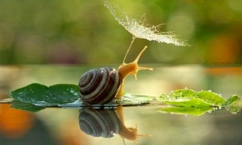 caracteristicas de los caracoles