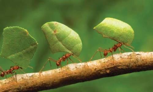 comportamiento hormigas