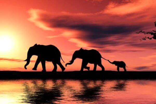 cuántas tipos de elefantes existen