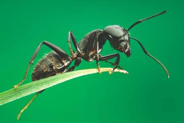 Hormigas, cómo son, qué comen, tipos, dónde viven