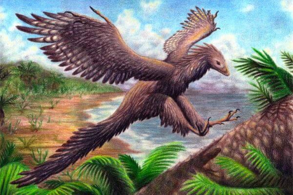 Antepasado de la cigüeñas - Archaeopteryx