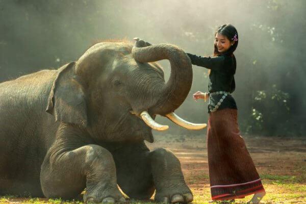 los humanos y el elefante