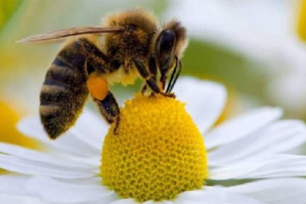 Todo sobre las abejas