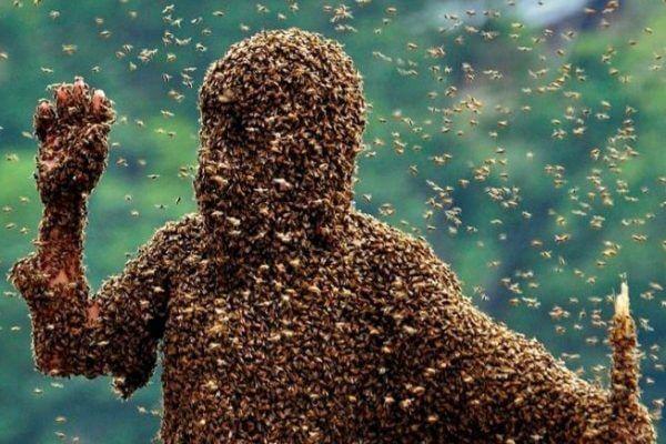 cómo es la relación entre el hombre y los insectos