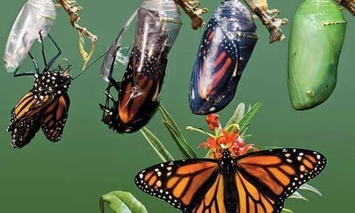 metamorfosis mariposa para niños