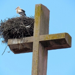 cómo construye el nido la cigüeña