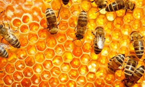 definición abeja
