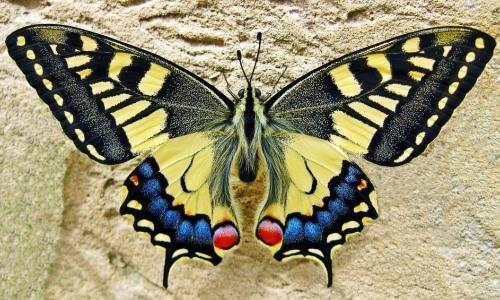 características de las mariposas para niños