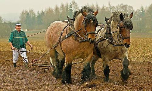 El caballo y el hombre