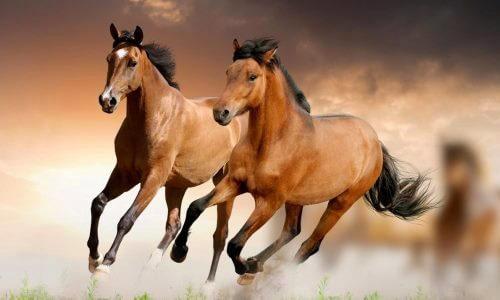 características del caballo