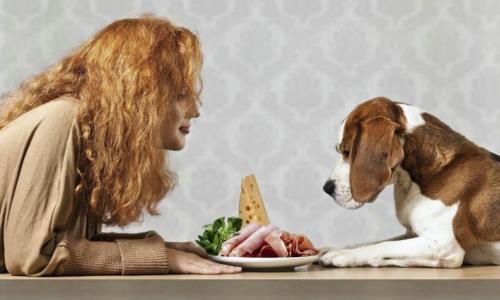 por-que-el-perro-depende-del-hombre