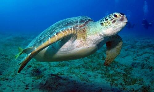 que come la tortuga de agua