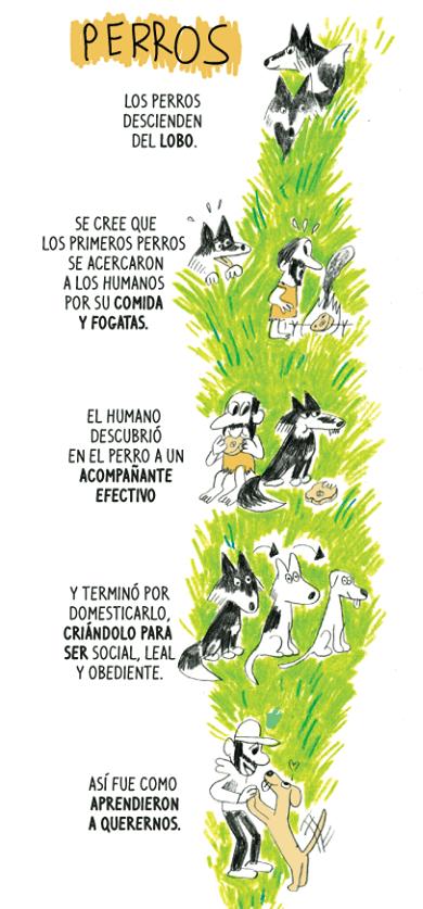 cuál es el origen del perro doméstico
