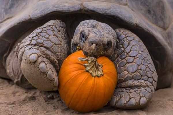 Cómo evitar que una tortuga enferme