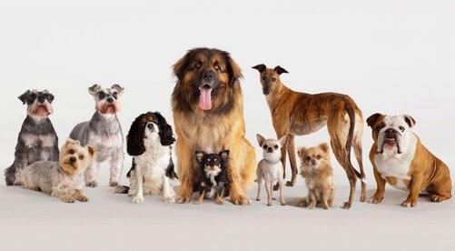 anos-que-pueden-vivir-los-perros
