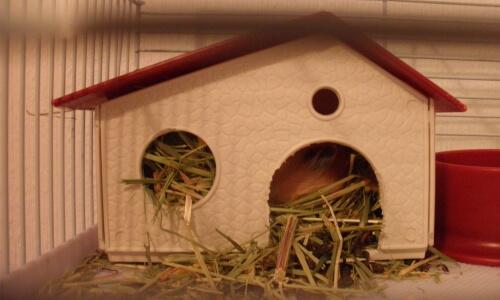casita para hámster