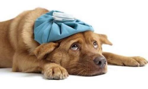 causas de que un perro llore