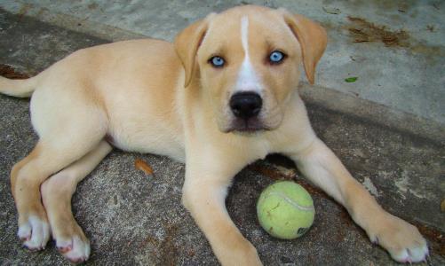 por-que-los-perros-mestizos-viven-mas-que-los-perros-de-raza