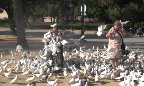 hábitat de los palomas