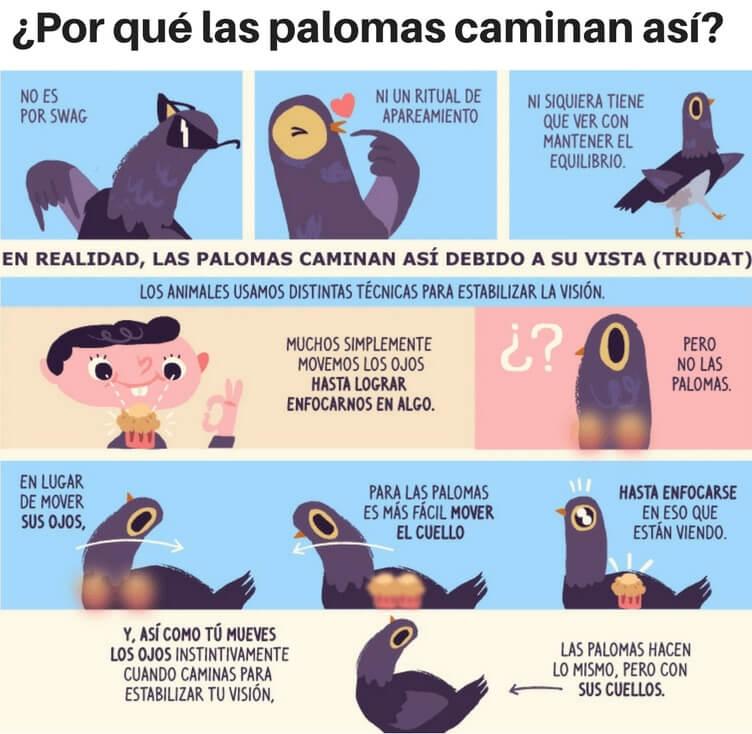 Cómo ven las palomas