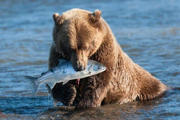oso alimentación dieta