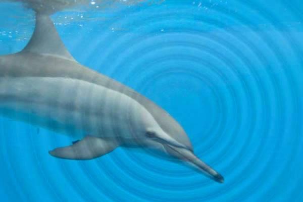 ¿Cómo es la comunicación de los delfines?