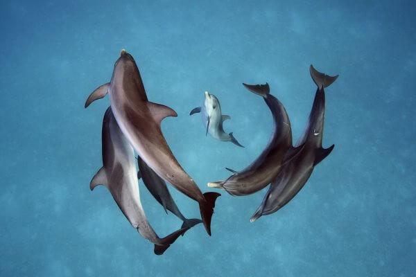 ¿Cómo es la reproducción de los delfines?