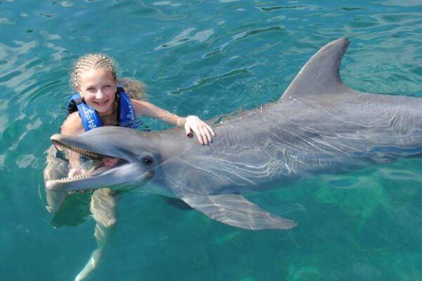 cuánto mide un delfín de largo