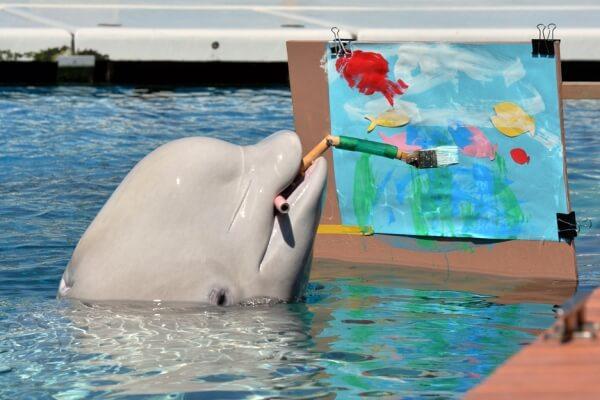 cerebro delfin vs hombre
