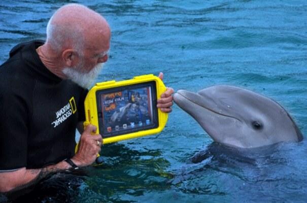 iq del delfín