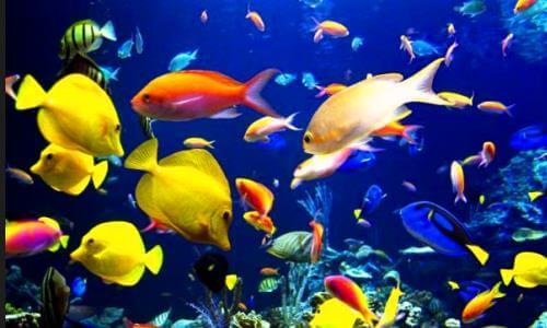 Cómo afecta el hábitat en la respiración de los peces