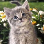Cómo saber el sexo de un gato