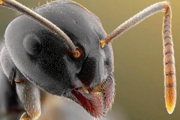 Fotografías de hormigas