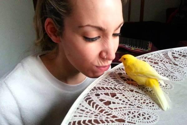 cómo hacer que mi canario confíe