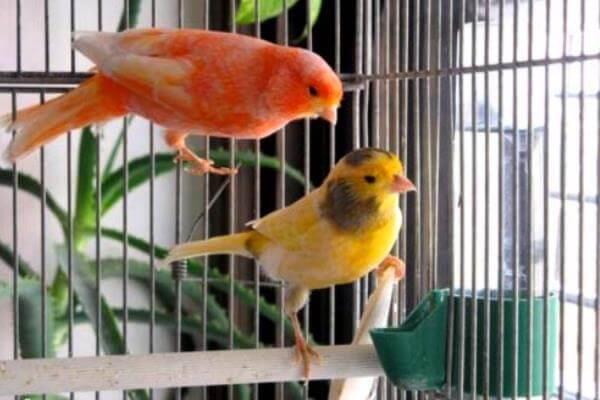 en qué ligar de la casa poner la jaula del canario