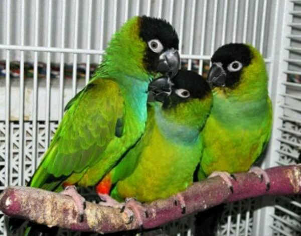 legislación cotorras aves