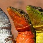 fotografías de lagartijas